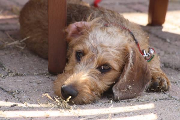 puppybass1