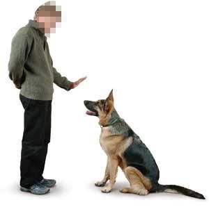 cane-seduto