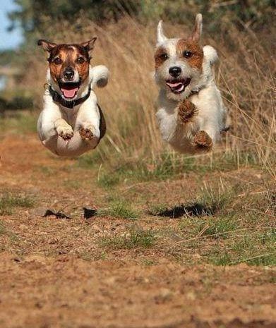 Ma quali sono i cani da parchetto ti presento il cane for Cani giocherelloni