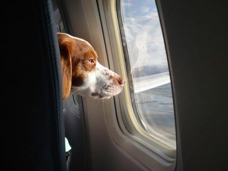 Cane-aereo