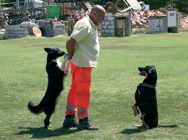 Effetto collaterale dell'attivazione mentale: i cani possono diventare più furbi di noi!