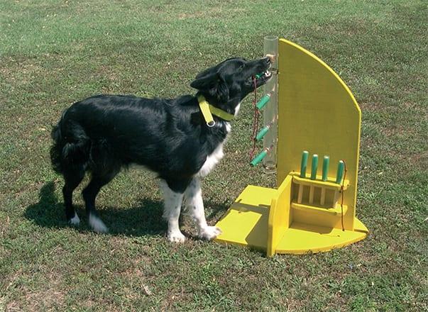 Un altro esercizio che non sembrebbe neppure alla portata della mente di un cane: il bocconcino è inserito in alto sul tubo, e Clio deve togliere TUTTI i perni per farlo scendere...cosa che esegue alla velocità della luce!
