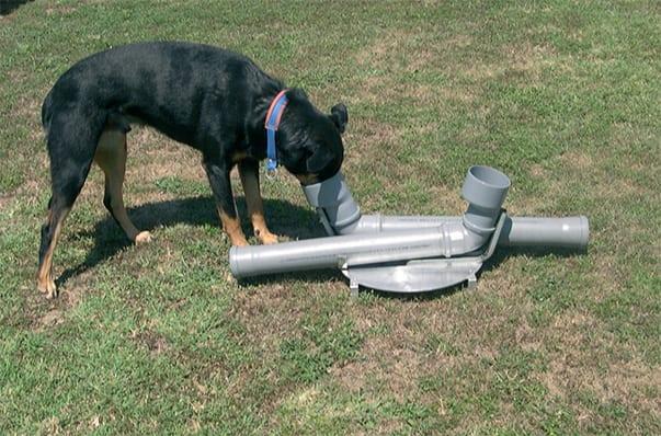 Un esercizio di grandissima difficoltà: il cane deve inserire la pallina a un'estremità del tubo, raccoglierla quando esce e andarla a infilare all'estremità dell'altro tubo
