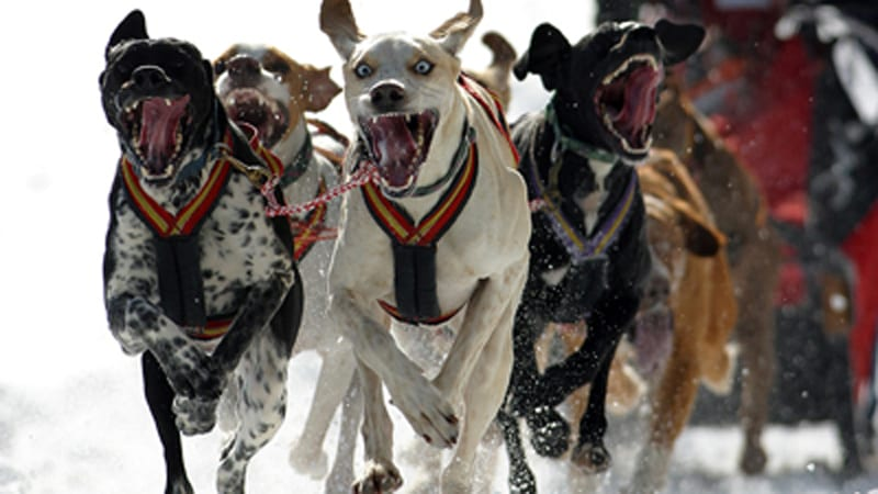Schlittenhunde WM 2003 Sprint