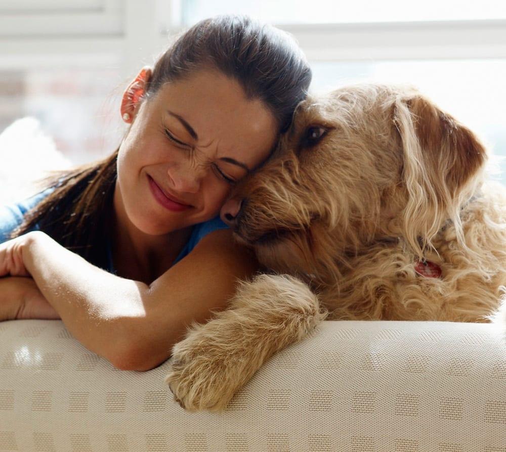 """cani adottati al canile: attenzione all'effetto """"fine luna di"""