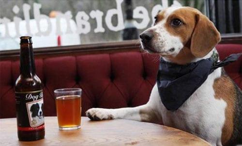 cane-birra