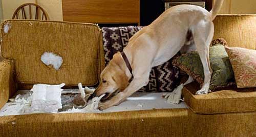 ansia da separazione cane esercizi