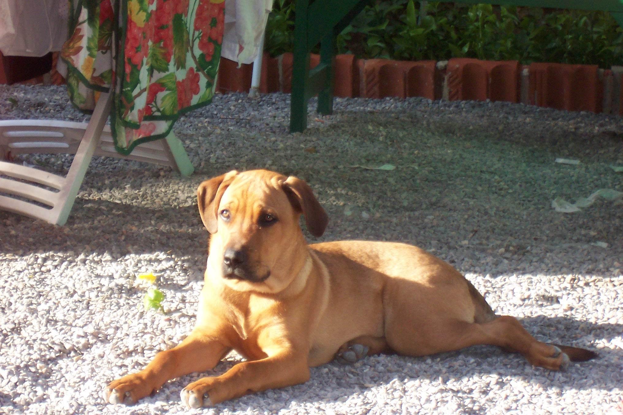 Il Cane Adolescente Aiuto Non Lo Riconosco Più Ti Presento Il Cane