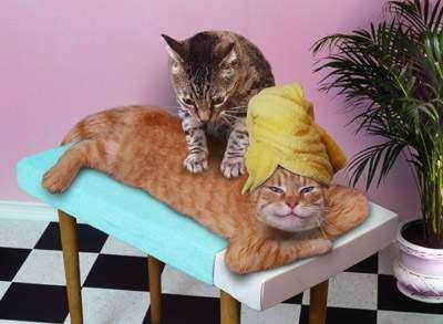 gattostress4