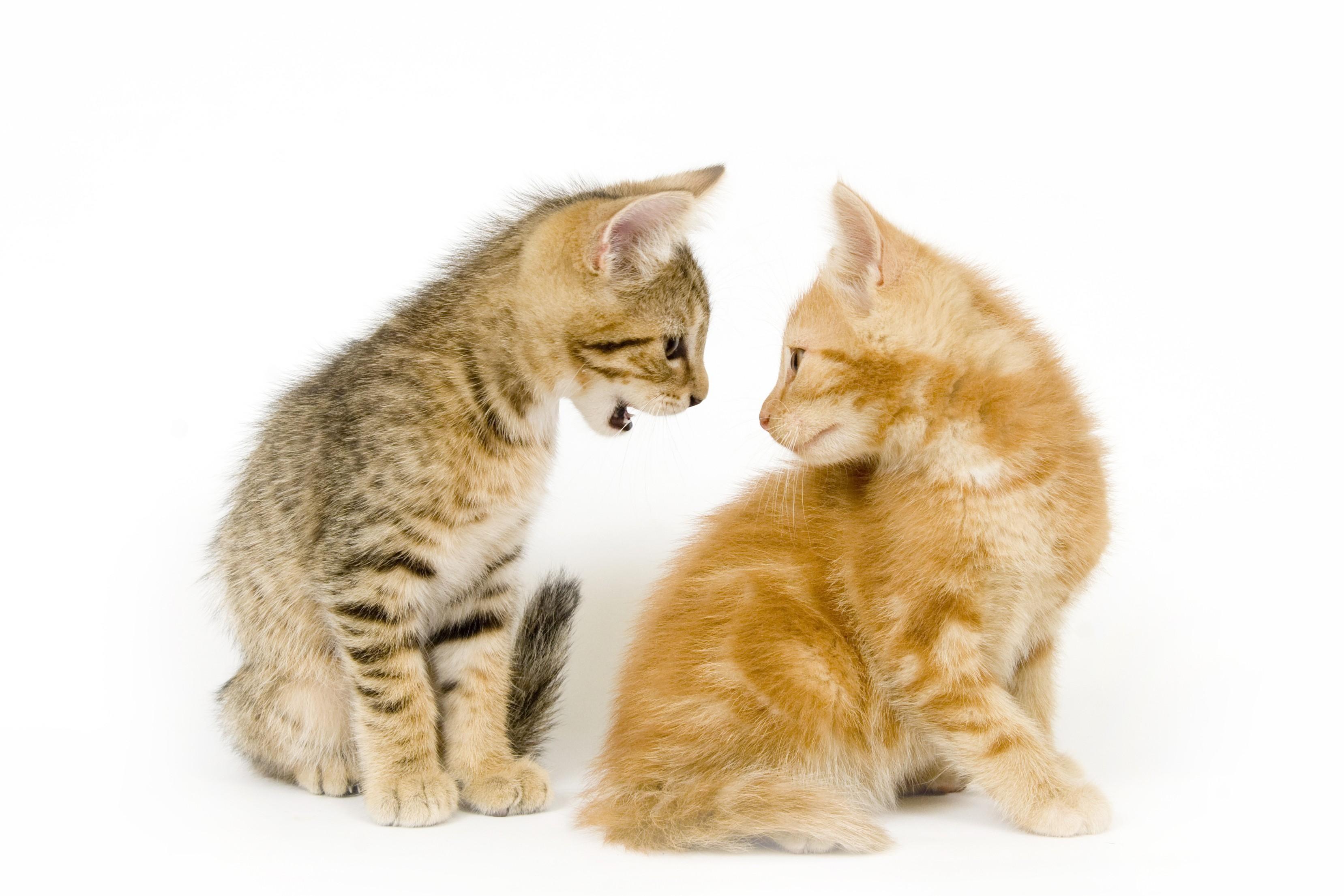 gattostress3