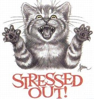 gattostress2