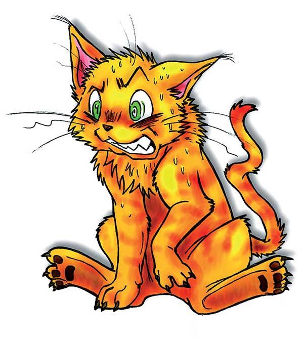 gattostress