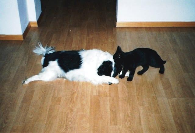 Lucy e Benny 640
