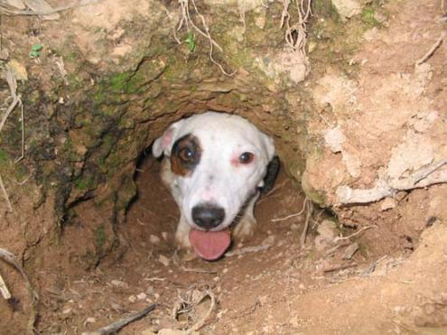 I perch cinofili perch il cane scava in giardino ti for Soluzioni per giardino