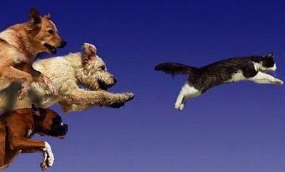 I perch cinofili perch i cani scappano ti presento - Colorazione immagine di un cane ...