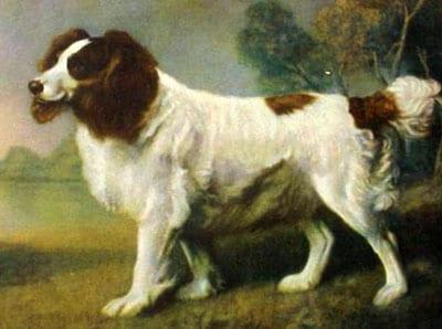 Land Spaniel - dipinto di  George Stubbs (1761 - 1806)