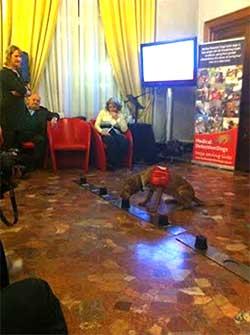 Segnalazione di un campione positivo: dimostrazione nel corso dell'incontro tenutosi a Milano nel febbraio 2012, organizzato da MDD Italia.