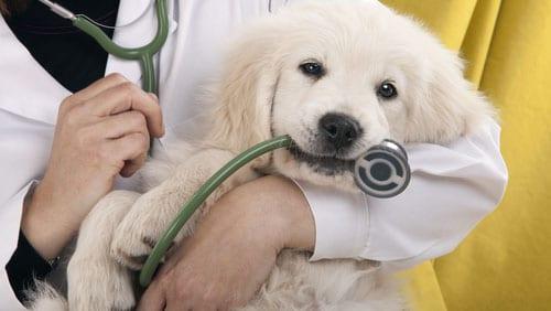 cane_veterinario