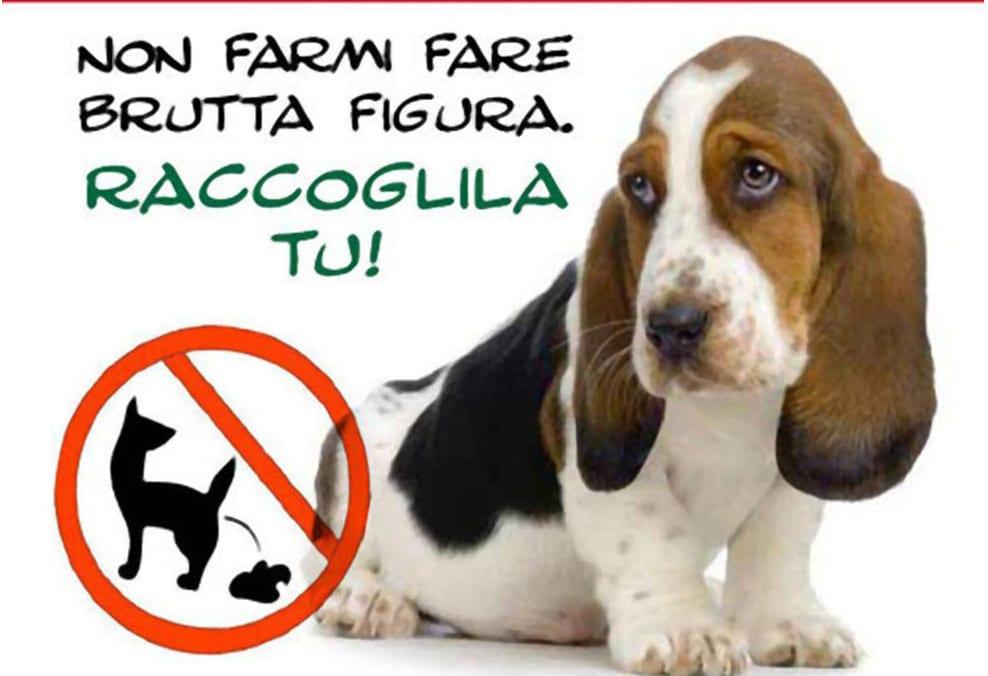 Educazione civico cinofila consigli pratici ti presento il cane - Cani che non vogliono fare il bagno ...