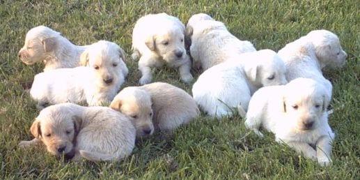 cucciolata_puppy