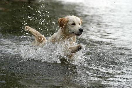 Risultati immagini per cane che gioca in acqua