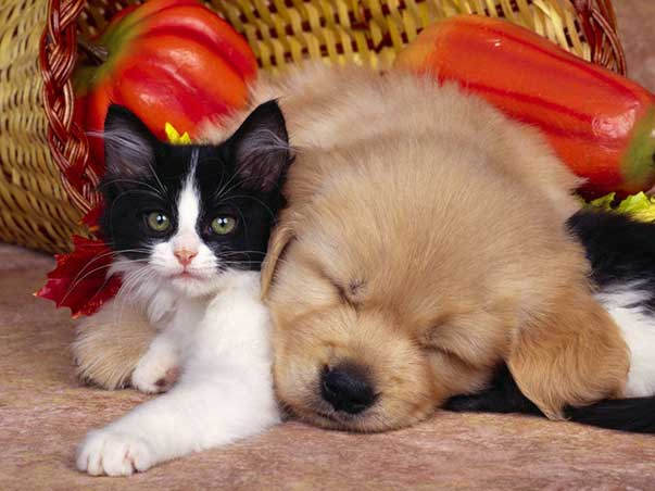cane-e-gatto-dog-cat-1024x768