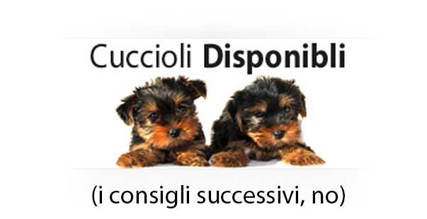 cuccioli_disponibili