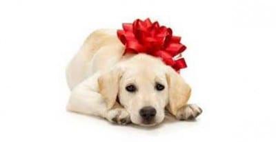 regalo_aper