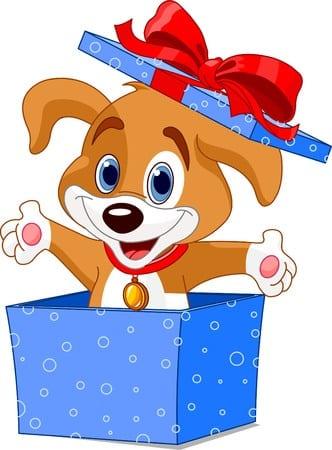 cerco cane corso in regalo fiori da regalare ad una ragazza