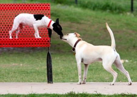 incontro-due-cani