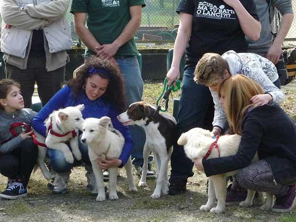 Puppy class (perché ovviamente consigliamo a tutti di NON far socializzare il cane con i suoi simili)