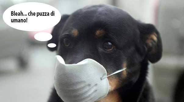 cane_puzza