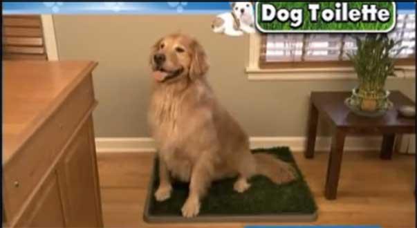 Quando La Pipì Si Fa Fare Volutamente In Casa Ti Presento Il Cane