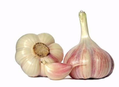 Garlic (isolated)