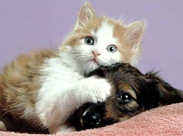 Portrait of a kitten lying on top of a puppy.