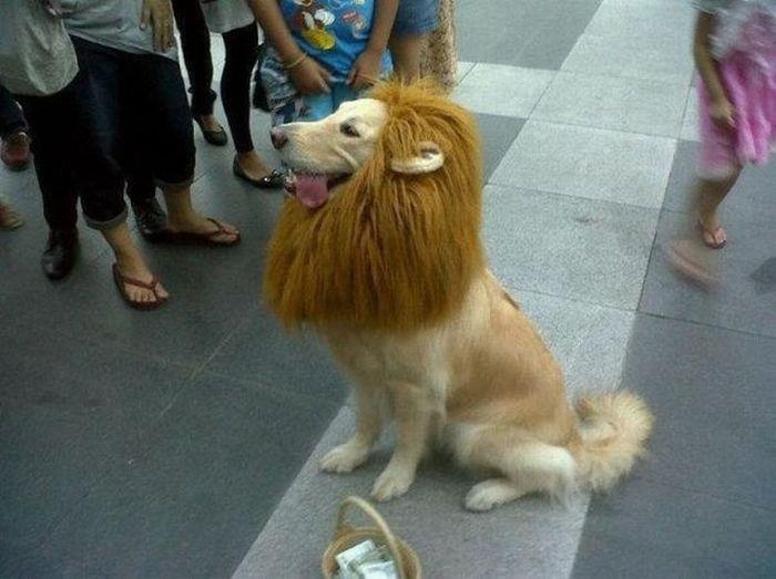 cane-o-leone