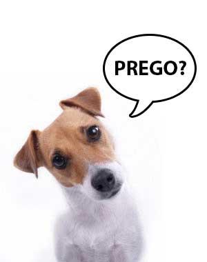 cane-perplesso