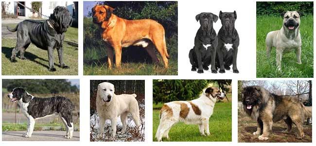 Qual è Il Miglior Cane Da Guardia Ti Presento Il Cane