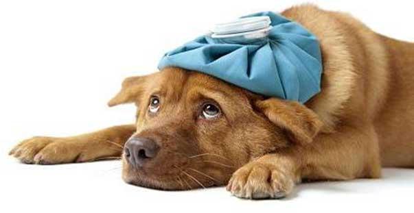 Come somministrare una medicina al cane Ti presento il cane