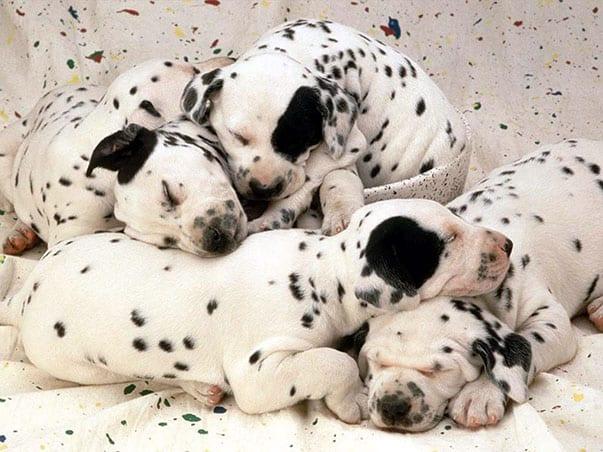 cuccioli1