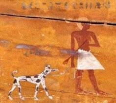 egiziocane