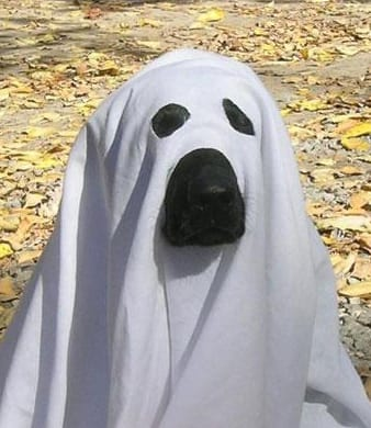 cane_fantasma