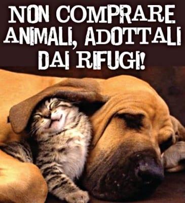 non_comprare_animali_colore
