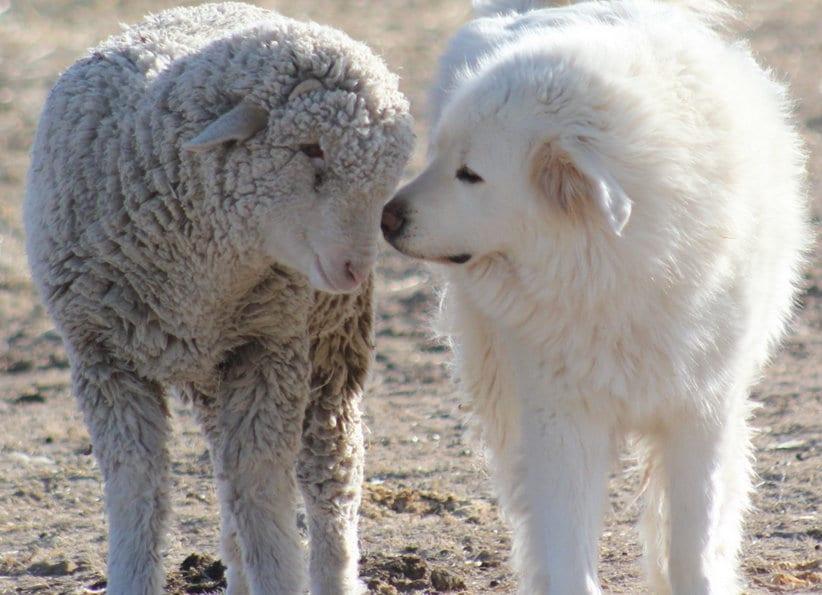 I cani da guardian a sono un pericolo per gli altri ti - Quando fare il primo bagno al cane ...