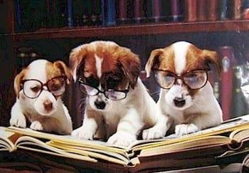 cani-che-leggono-un-libro