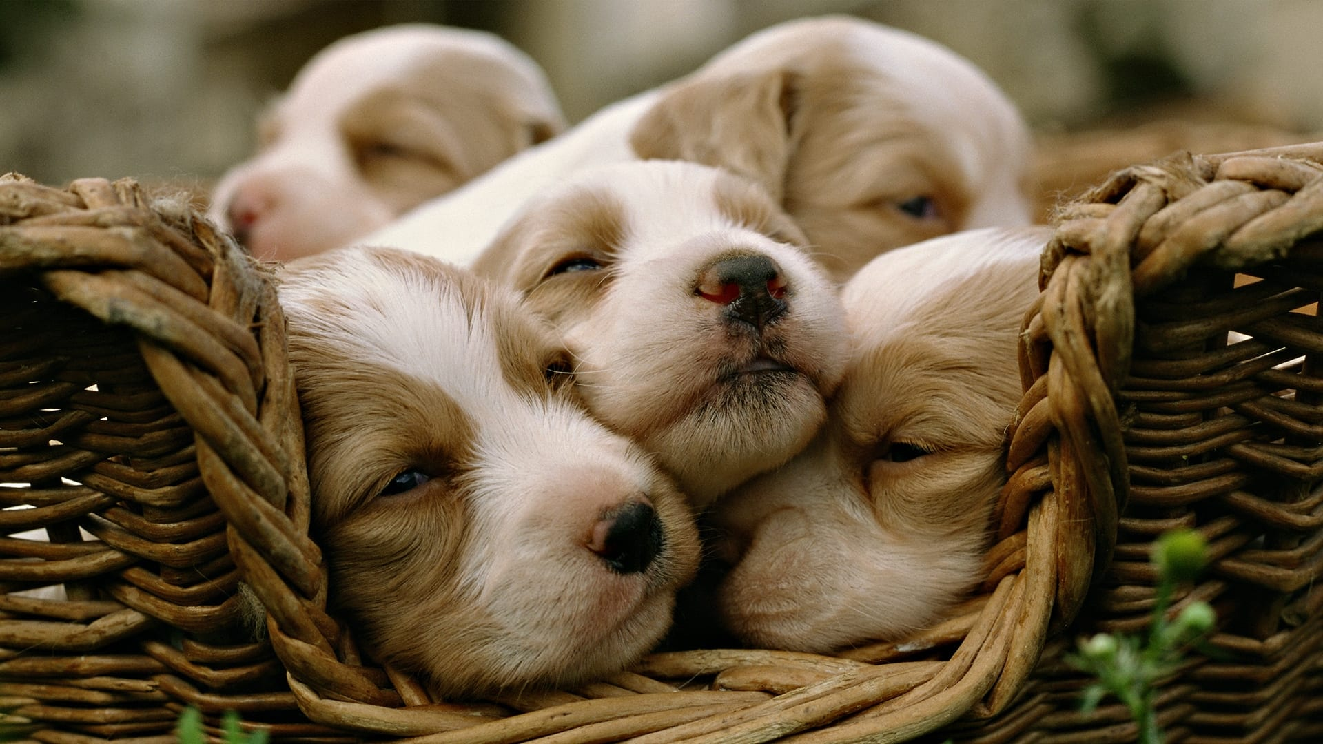 Calcola anni cane | Calcola età del cane