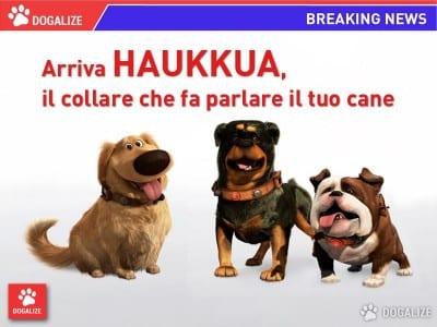 dogtranslator4