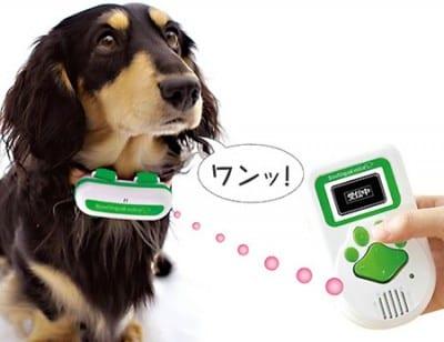 dogtranslator3