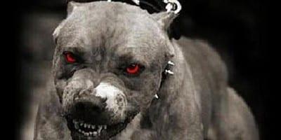 Il tipo di immagine che si vede sui giornali quando un cane (qualsiasi) morde qualcuno. Anche se è un barboncino.
