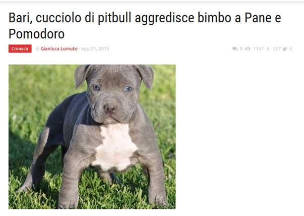 cucciolo_aggredisce